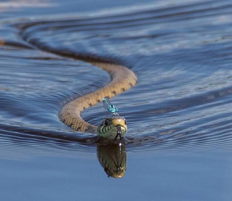 Водная прогулка на змее