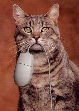 Так охотятся коты программистов …