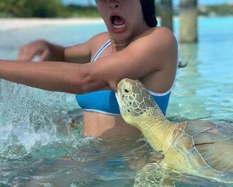 Черепаха хочет мяса